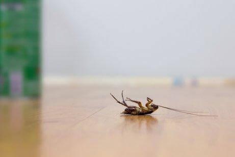 Hamam Böceği İle Mücadele İçin İlaçsız 5 Yöntem