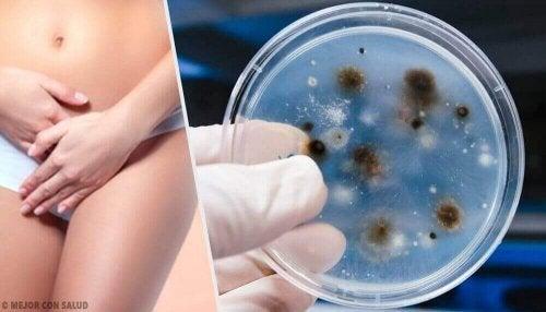 Vajinal EnfeksiyonlarınTürleri ve Sebepleri
