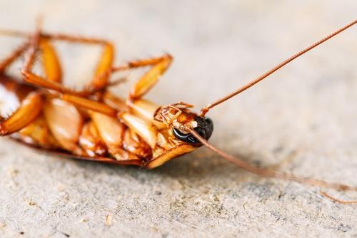 yerde duran hamam böceği