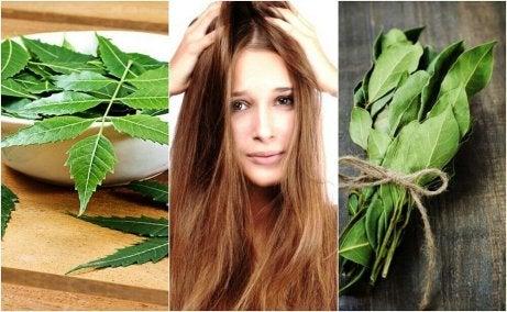 saçlar için biberiye yağı