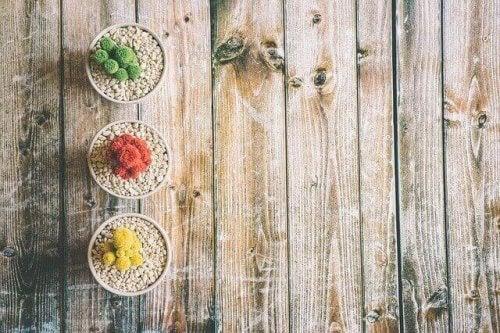 rengarenk kaktüsler