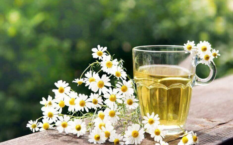 kalın bağırsak detoksu için papatya çayı