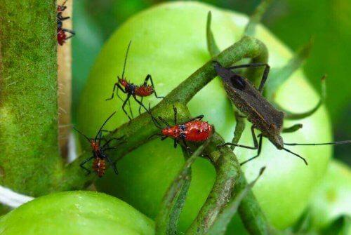 Böceklerden Kurtulmak İçin 5 Zehir