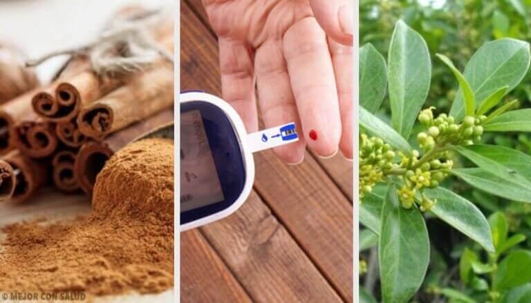 Diyabet İçin Şifalı Bitkiler : Gerçekten İşe Yarıyor!