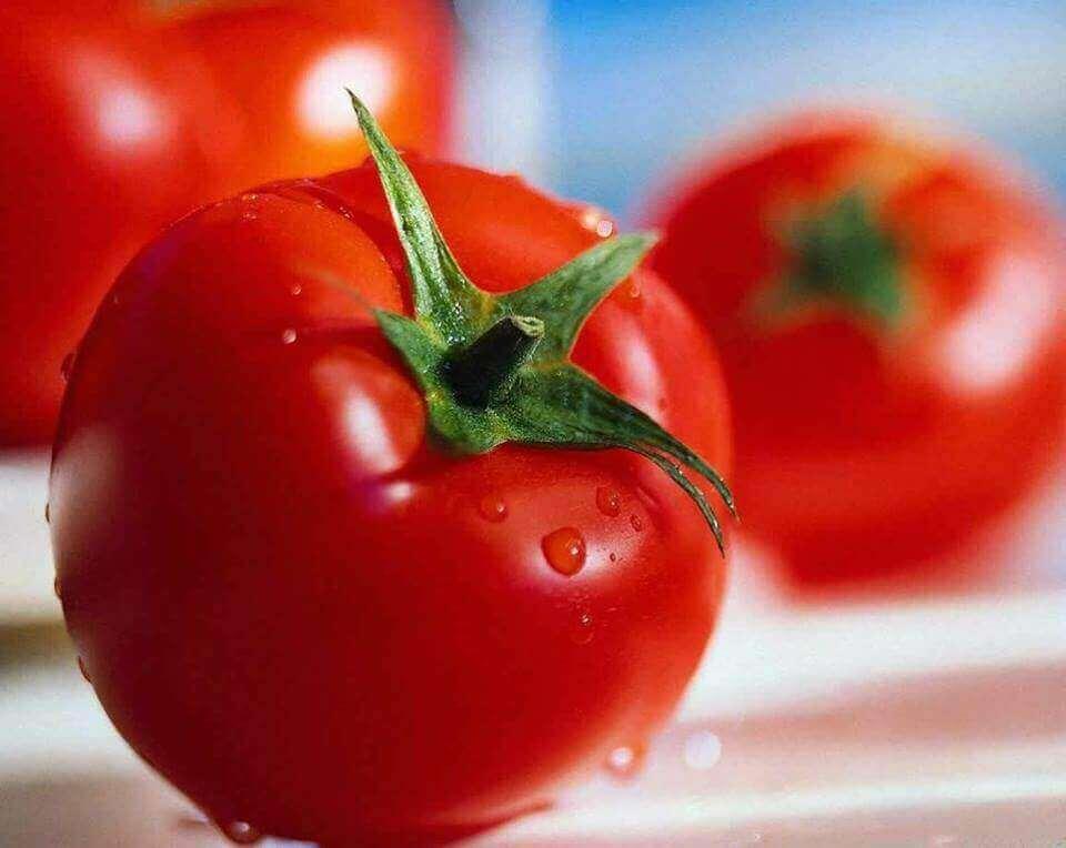 yıkanmış parlak domates
