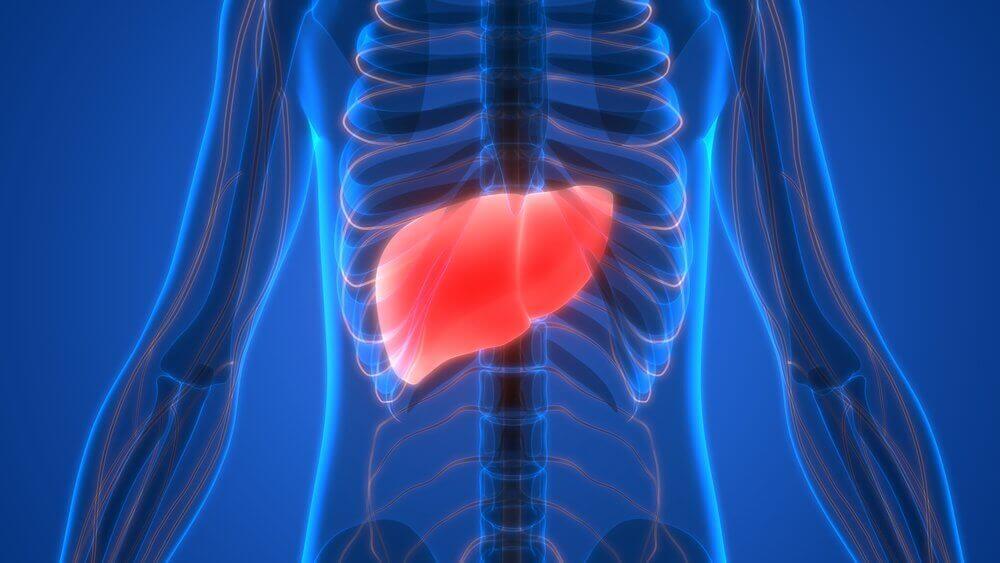 karaciğer şeması