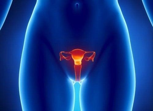 menstrüel döngü