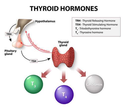 hormon şeması