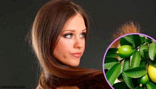 Zarar Görmüş Saçlar İçin Guava Yaprakları
