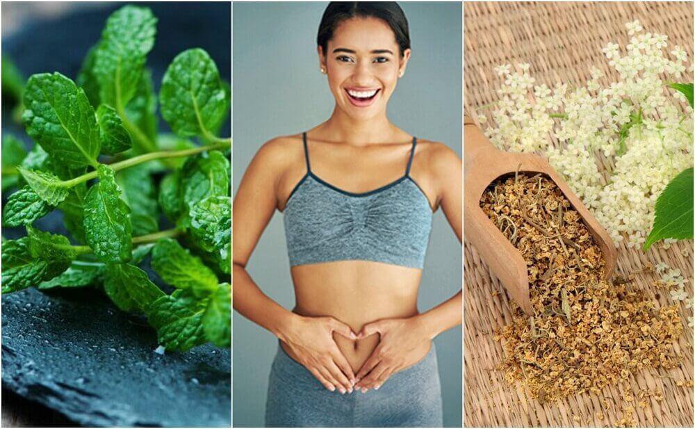 6 Şifalı Bitki İle Sindirim Sisteminizi İyileştirin