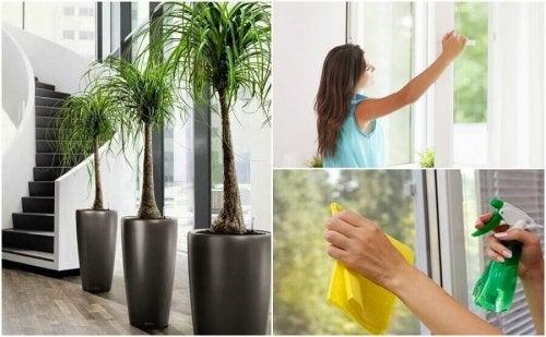 Evinizin Havasını İyileştirmek İçin Yapabileceğiniz 6 Şey