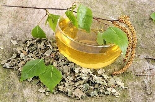 huş ağacı çayı