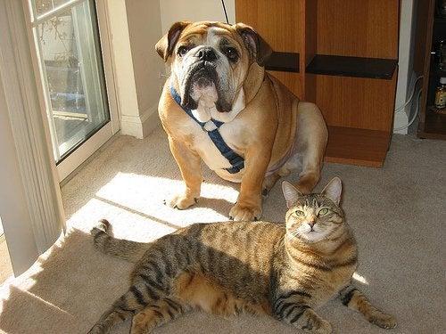 kedi köpek