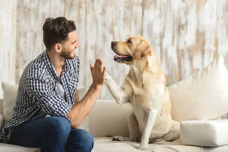 adam ve köpek çak yapıyor
