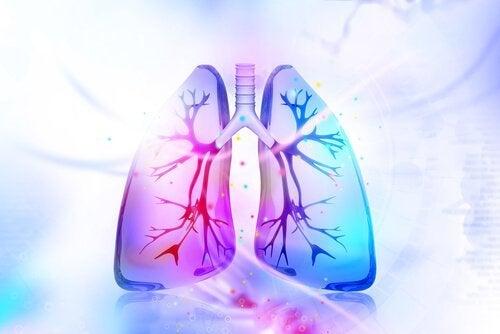 Akciğerlerinize Detoks Yapmak İçin Bu Doğal Çözümleri Deneyin