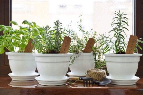 Aromatik Bitkiler: Kendi Aromatik Bahçenizi Oluşturun
