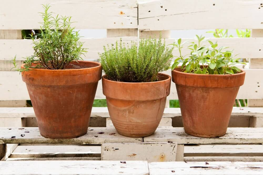 aromatik bahçenizi oluşturun üç saksı