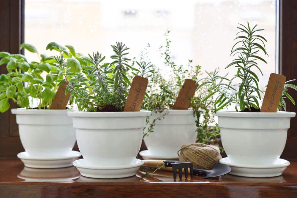 Kendi Aromatik Bahçenizi Oluşturun