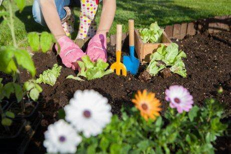 Bahçenizde Sirkeden Faydalanmanın 7 Yolu