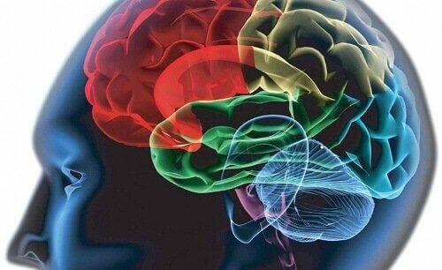 beyin görselinde renklendirilmiş bölümler
