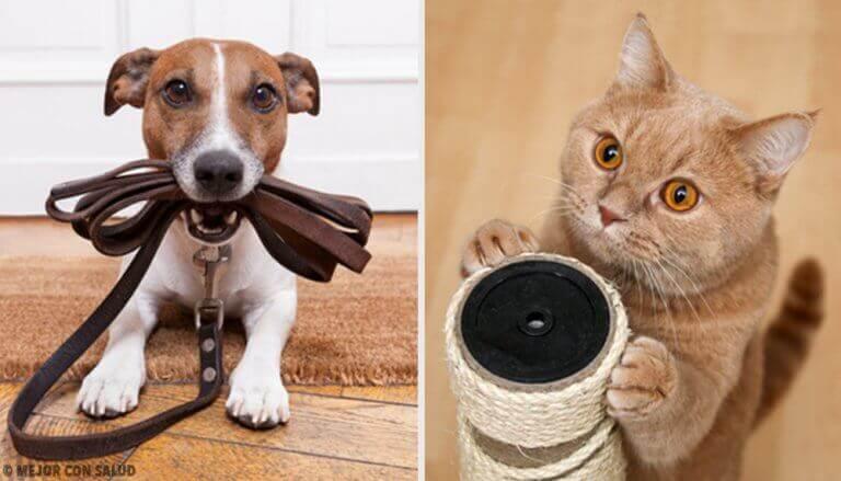 Sizin İçin En Yararlı Evcil Hayvanı Öğrenin