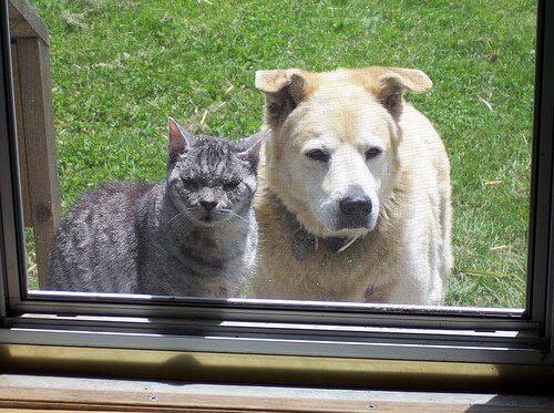 içeri bakan kedi köpek