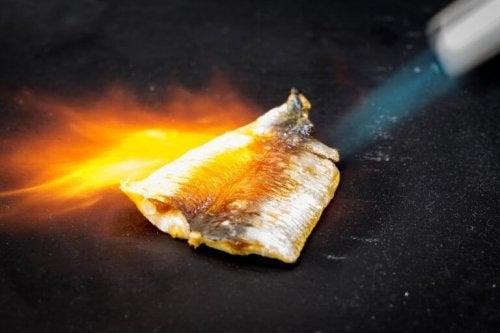 kurutulmuş balık