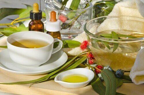 okaliptus çayı