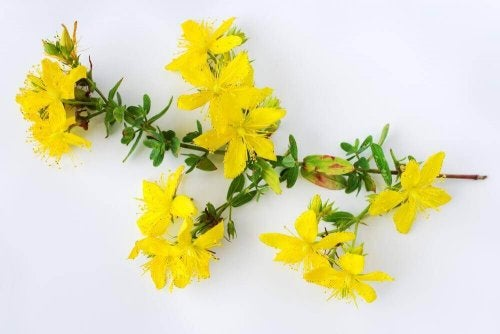 Sarı Kantaronun 6 Faydası