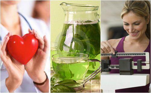 Yeşil Çay İçmenin 6 Önemli Yararı