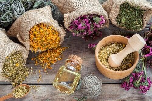 aromali bitkiler