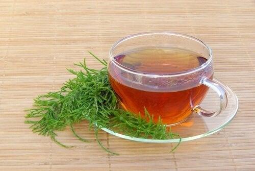 atkuyruğu çayı