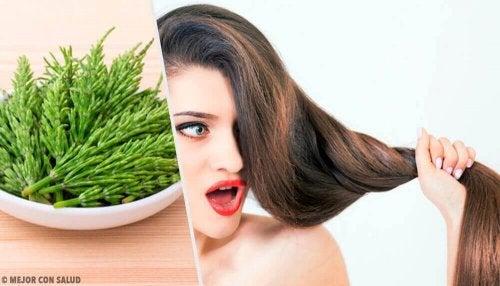 Saç Uzamasına Yardım Etmesi İçin Atkuyruğu Nasıl Kullanılır