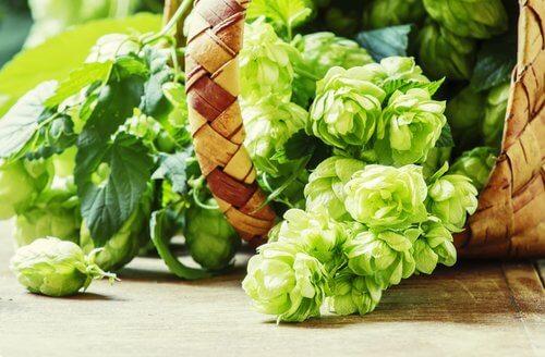 sepette yeşil çiçekler