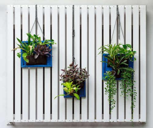 duvarda asılı olan bitki