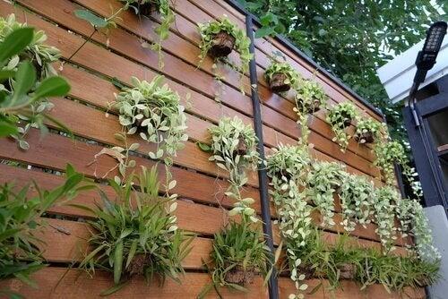 Sıradan Bir Duvarı Dikey Bahçeye Dönüştürmek için Dört Fikir