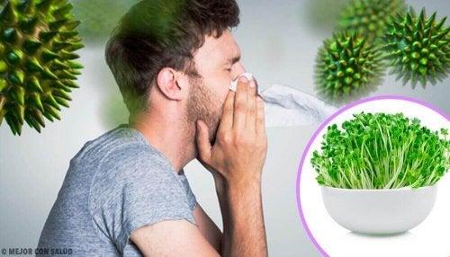 Alfalfa Yemenin 6 Faydası