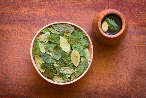 Koka Yaprağı Çayı Ve Sağlığa Şaşırtıcı Yararları