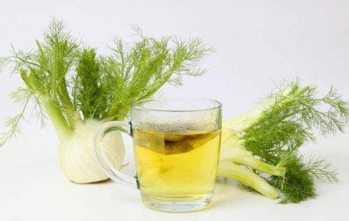 rezene çayı ve rezene bitkisi