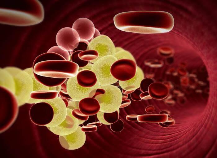 vücut içi kolesterol