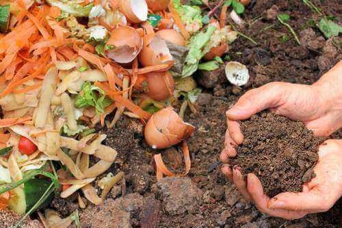 Bitkileriniz İçin Doğal Gübre Yapmanın 5 Yolu