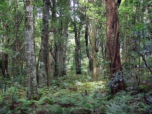 uzun ağaçlar
