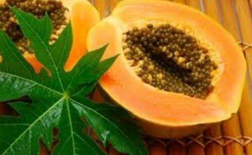 papaya yaprakları trombosit