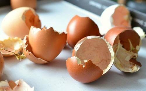 yumurtanın kabuğu