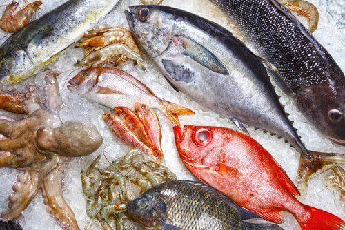 buzda çeşitli balıklar