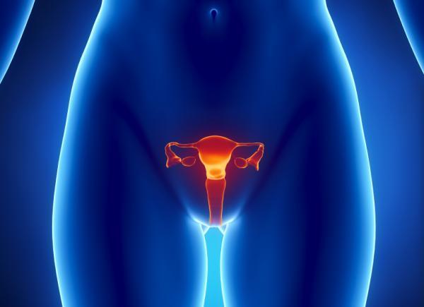 kadın yumurtalığının şeması