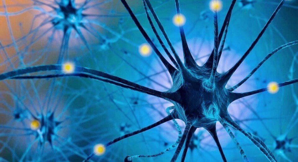 renkli sinir hücreleri