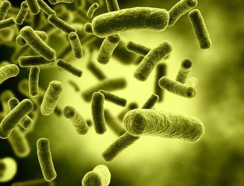 yeşil çubuk şeklinde toksin molekülleri