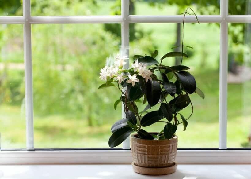 cam önünde duran çiçek