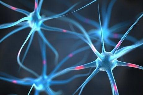 nöronlar birbirine bağlı